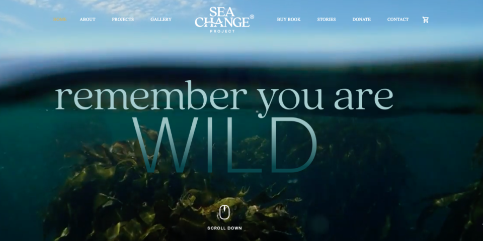 Sea Change Project Brand Building